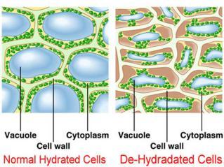 celulas hidratación